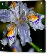 Crying Fringed Iris-iris Japonica Acrylic Print