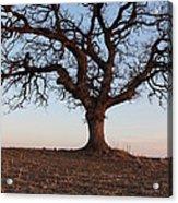 Cryptic Tree Acrylic Print