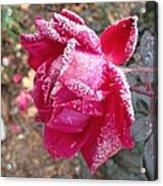 Crystal Rose Acrylic Print
