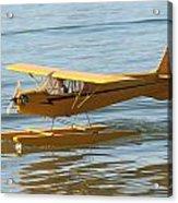 Cub On Floats Acrylic Print