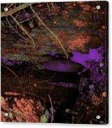 Cul-de-sac Biology Acrylic Print