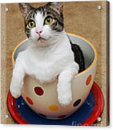 Cup O Tilly 1 Acrylic Print by Andee Design