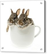 Cup Of Bunnies Acrylic Print by Elena Elisseeva