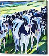 Curiosity Cows Original Sold Prints Available Acrylic Print