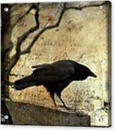 Curious Crow Acrylic Print