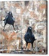 Curious Crows  Acrylic Print