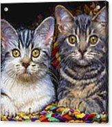 Curious Kitties Acrylic Print