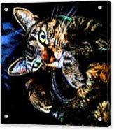 Curious Kitty Acrylic Print