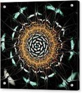 Curious Moth Acrylic Print