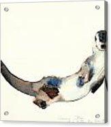 Curious Otter Acrylic Print by Mark Adlington