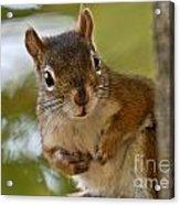 Curious Squirrel Acrylic Print