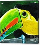 Curious Toucan Acrylic Print by Laura Charlesworth