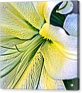 Curl Of A Lily Acrylic Print