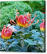 Curly Flowers Acrylic Print