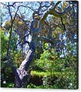 Curly Tree Acrylic Print