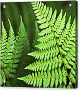 Curved Fern Leaf Acrylic Print