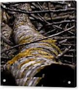 Curves  Leif Sohlman Acrylic Print