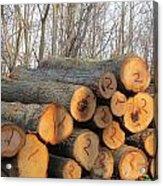 Cut Logs Acrylic Print