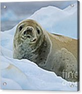 Cute And Cuddly... Acrylic Print