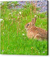 Cute And Fluffy - Digital Painting Effect Acrylic Print