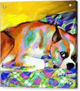 Cute Boxer Dog Portrait Painting Acrylic Print by Svetlana Novikova