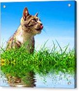 Cute Cat Outdoor Portait Acrylic Print