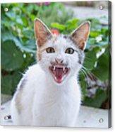 Cute Cat Acrylic Print