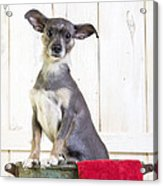 Cute Dog Washtub Acrylic Print
