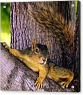 Cute Fuzzy Squirrel In Tree Near Garden Acrylic Print