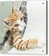 Cute Ginger Kitten In Igloo Acrylic Print