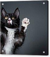 Cute Kitten Playing - The Amanda Acrylic Print