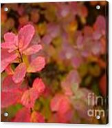 Cute Pink Plant Acrylic Print