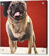 Cute Pug Dog In Vest And Top Hat Acrylic Print by Edward Fielding