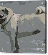 Cute Puggy Dog Acrylic Print
