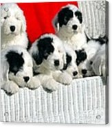 Cute Puppies Acrylic Print