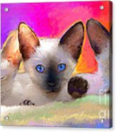 Cute Siamese Kittens Cats  Acrylic Print