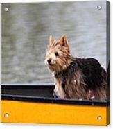 Cutest Dog Ever - Animal - 011342 Acrylic Print