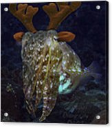 Cuttlefish With Reindeer Hat Acrylic Print