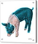 Cyan Piglet - 0878 Fs Acrylic Print