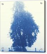 Cyanotype Cemetery Acrylic Print