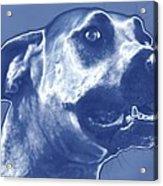 Cyanotype Dog Acrylic Print