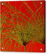 Cyperus Papyrus Abstract Acrylic Print