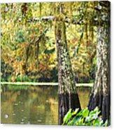 Cypress And Moss Acrylic Print