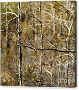 Cypress Branches Acrylic Print