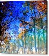 Cypress Fog 3 Acrylic Print