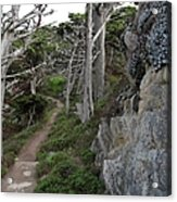 Cypress Grove Trail Acrylic Print