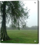 Cypress In The Mist Acrylic Print