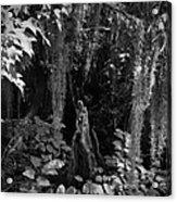Cypress Knee Acrylic Print