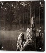 Cypress Knees In Sepia Acrylic Print
