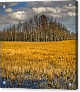 Cypress Marsh Acrylic Print